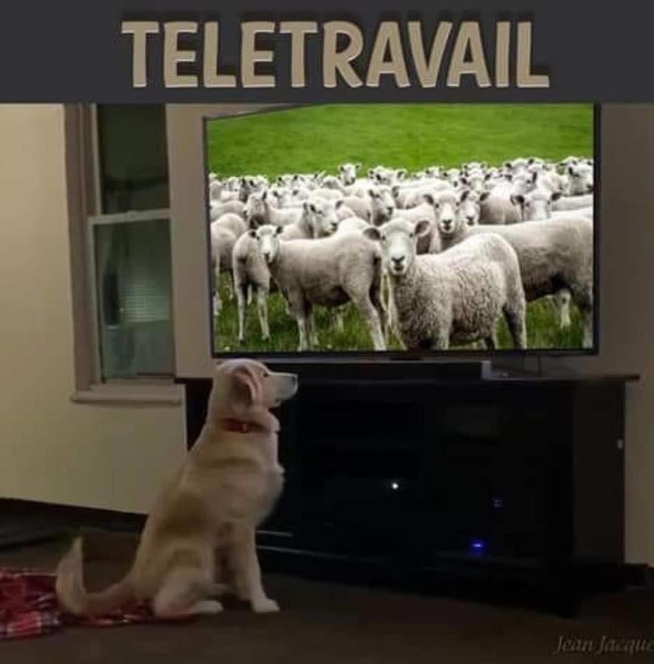 télétravail original